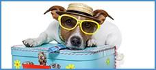 Para que viajar con tu mascota no se transforme en una auténtica pesadilla